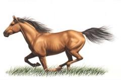 疾駆---おびただしい数の無料イラストからこの馬が気に入った。駆け抜ける勢いがいい。