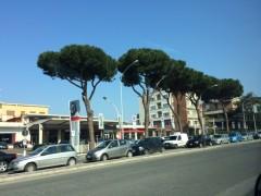 ローマ晴れ
