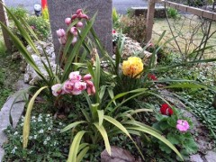 我が庭園は春爛漫。