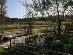 ミニ庭園の向こうにはコスモスが。