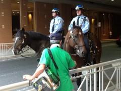 世界家庭大会の昼休みに見かけた馬のパトr-るたい。
