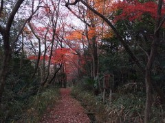 迷い込んだ森は公園の裏口だった。