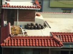 3年前の今月ソウルで見たキムチカメ。