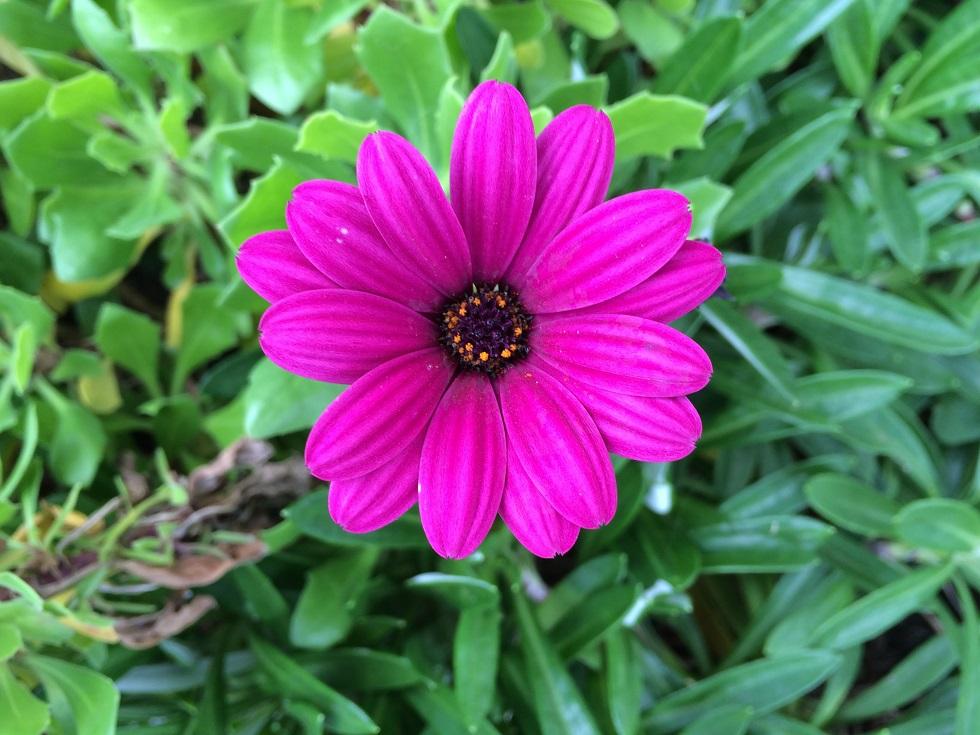 種子島教会の庭先に咲いていた