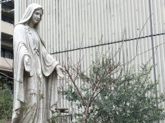 聖母と落葉したアーモンドとオリーブの木。