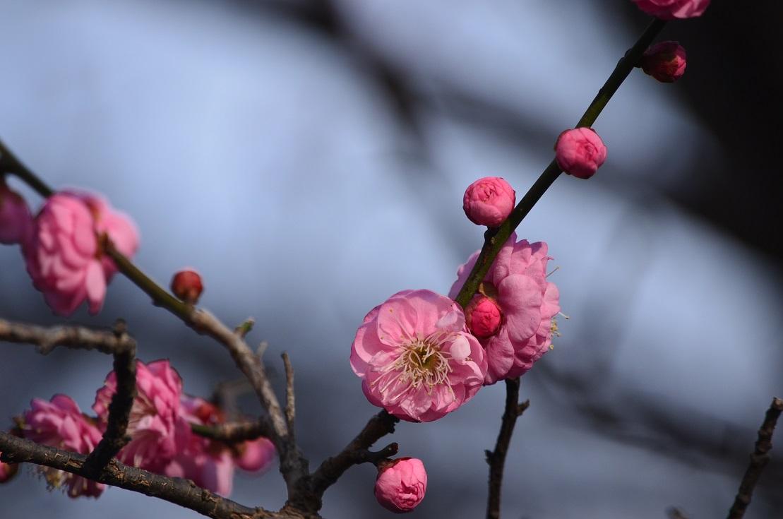 病人訪問の帰り道に見かけた春一番。