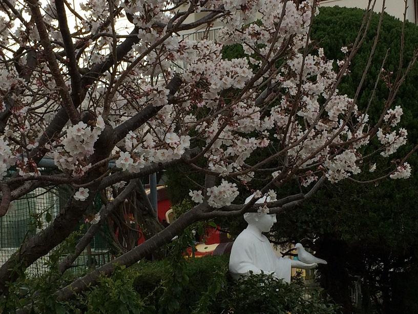 平和の園保育園の桜は満開
