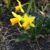 聖書の植物の庭に春が来た。