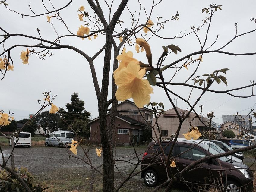 指宿市の花ビンペイ