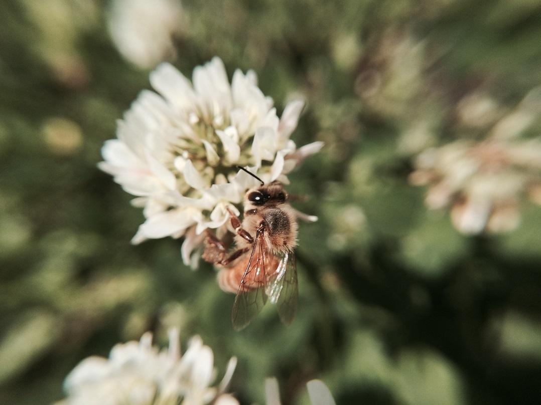 聖書の植物の庭のレンゲ蜜を求めて