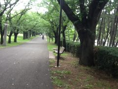 文字通り年輪を感じる桜の巨木