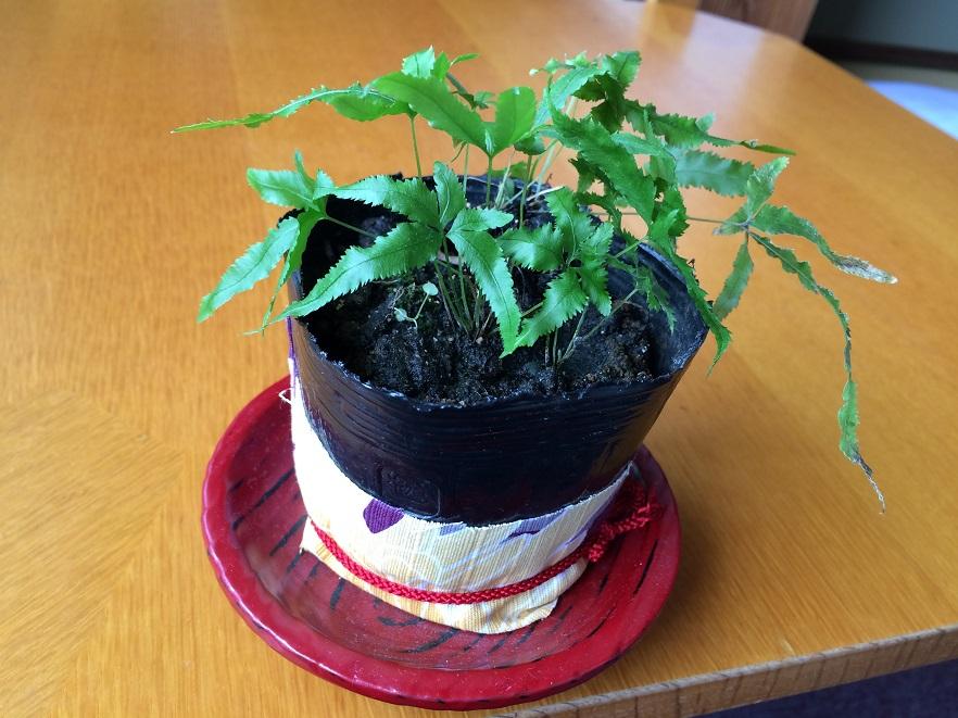 部屋のテーブルには野草の盆栽が