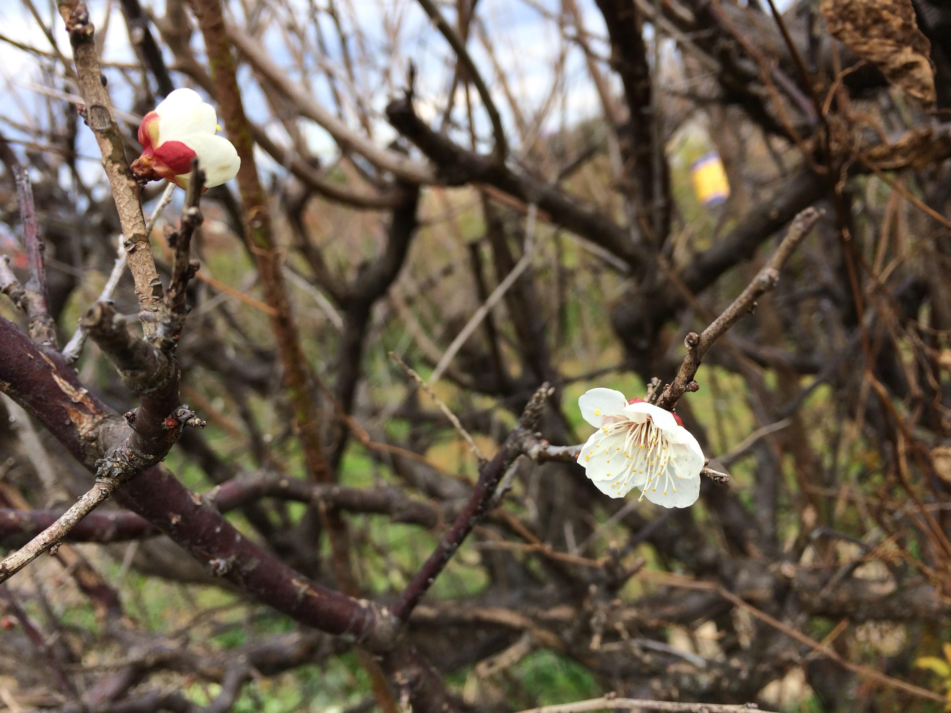 小さい春発見
