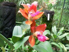2007年シンガポールの植物園にて