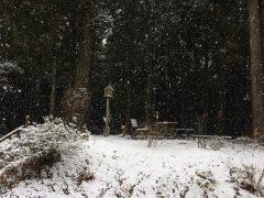 降りしきる雪は清光君からのサービス?
