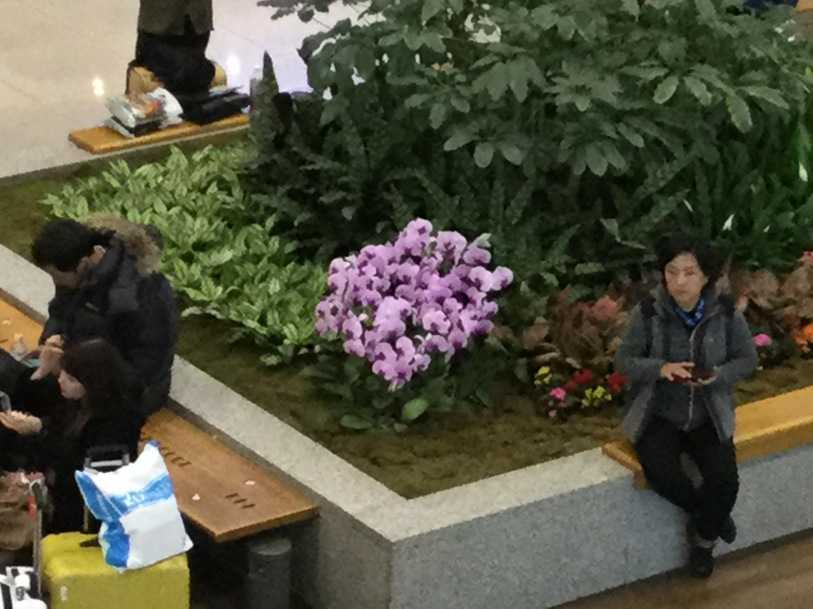インチョン空港ロビーの花壇