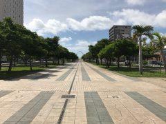 新都心公園への道。奥が公園。