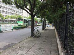 街中の竹やぶが懐かしい