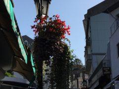 ルルの街角ボクの8年にも花が?