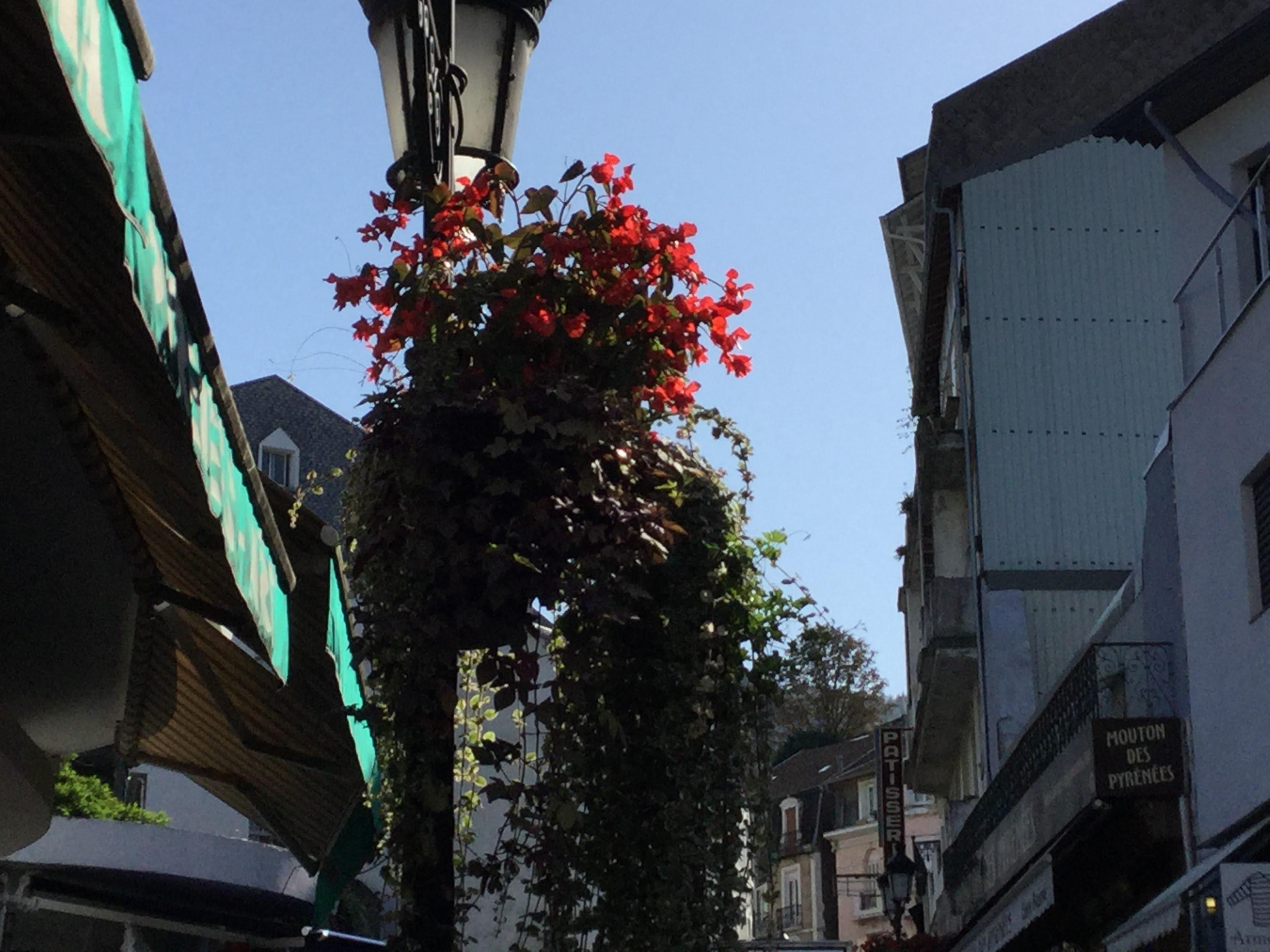 ルルの街角