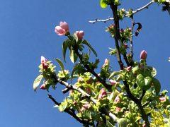 分かれは悲しくても希望の春