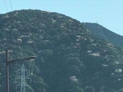 山桜。山の向こうは吉野公園