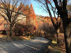 メタセコイアの紅葉が美しい