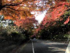 彩り豊かな参道