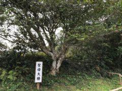 樹齢200年?
