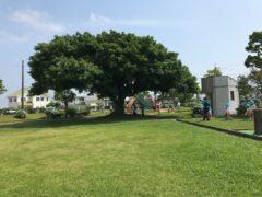 大きな木陰が子どもたちを迎えた