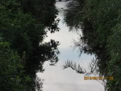 川面の芸術。空を映し植物を映す二反田川