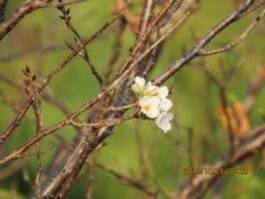 ひっそりと咲く季節外れの桜