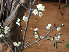 祭壇横の生け花にはもう春が