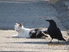 キミ、猫かぶっているだけ?