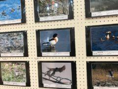 野鳥の会写真展。下段中央がボク