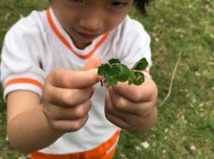 ホラ、四つ葉見つけた!