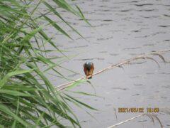 川面を見つめて獲物チェック