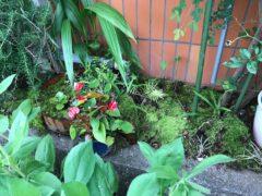 主任先生手造りの苔庭