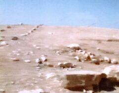 オアシス上の砂漠。緑化運動が進行中