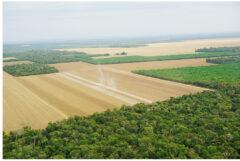 耕作地に。熱帯雨林保護団体HPより